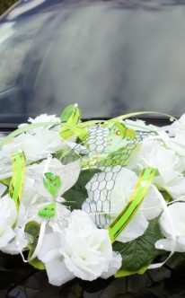 Weiße Blüten mit grünen Farbakzenten