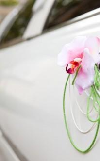 Einzelne Blüte mit grünen Bändern
