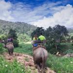 Elefanten-Safarie in Thailand