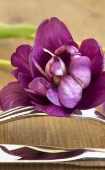 Violette Tulpen als Tischdeko