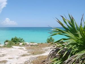 Palmenstrauch reicht an den Strand von Mexiko