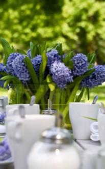 Tischdeko mit blauen Hyazinthen