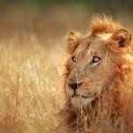 Flitterwochen in Südafrika