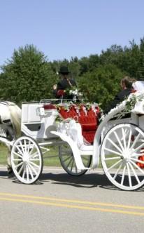 vor die weiße Hochzeitskutsche ist ein Schimmel gespannt