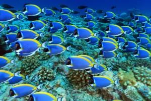 Tauchen vor den Malediven