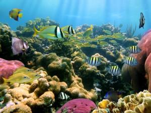 Bunte Fische in der Karibik