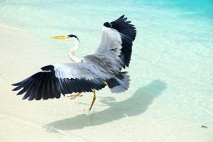 Ein Vogel am Wasser