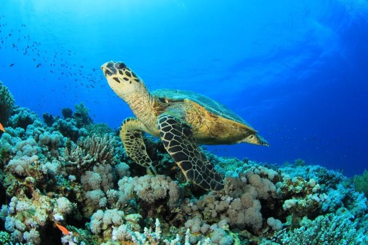 Meer der Seychellen