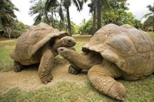 Schildkröten auf den Seychellen
