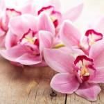 Blumensorten und ihre Bedeutung