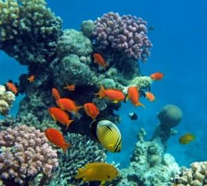 Korallen vor Bali