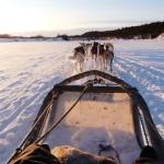 Finnland: Abenteuer-Flitterwochen im Schnee