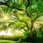 Baum für die Hochzeit – der Hochzeitsbaum
