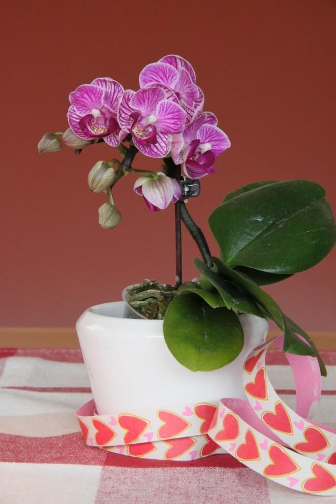 Orchideenhochzeit